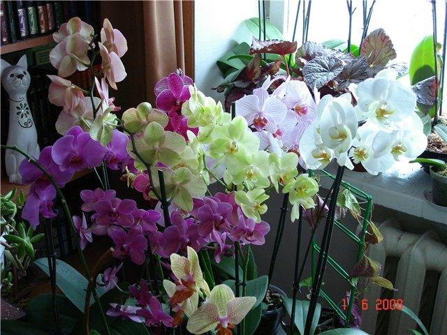 Как добиться цветения орхидее в домашних условиях 941