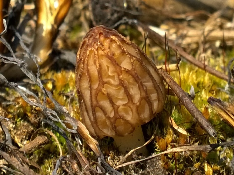 Лучик света - загадки про грибы